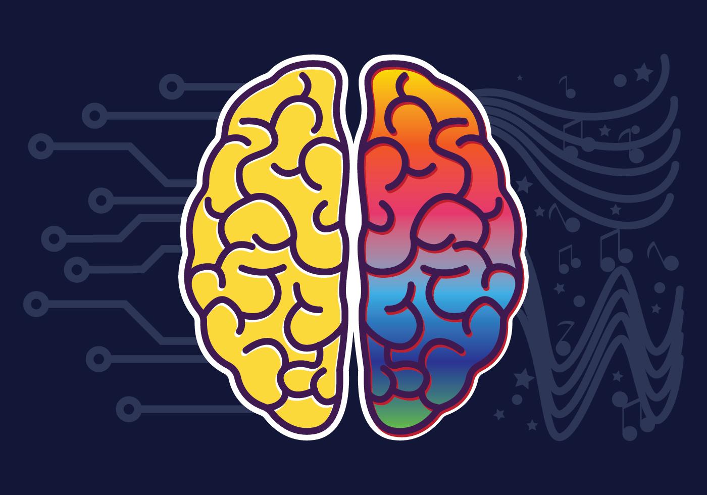 правый мозг левый мозг картинки будем